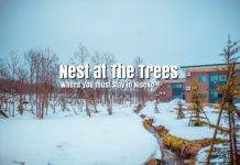nest-at-the-trees-where-you-must-stay-in-niseko