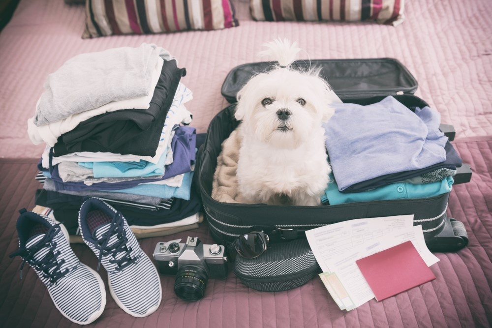 5 Tips for Traveling Safely with Your Pets